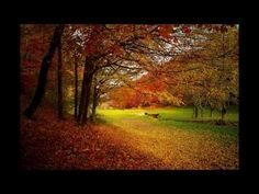 Here are the best places to visit in Europe in November. These Autumn destinations in Europe really comes alive with fall colors in October & November. Autumn Forest, Autumn Trees, Autumn Leaves, Autumn Fall, Autumn Scenery, Europe In November, September, Photos Free, Free Pictures