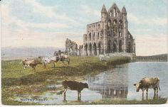 D C Thomson Ltd Postcard - Whitby Abbey (with cows grazing)