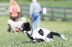 Ceremony marks grand opening of Vernon Dog Park - New Jersey Herald