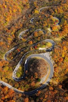 ride trip...Deal? Tail of the Dragon TN. Would You get car sick Baby? Or maybe on a motorcycle with Your monkey?