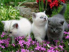 Sweet Kitties....