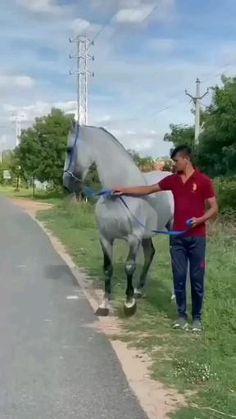 Gif, Horses, Horse