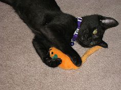 Make Cat Toys - wikiHow
