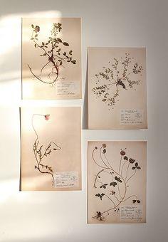 Julklappstips Herbarium från Sassabrassa