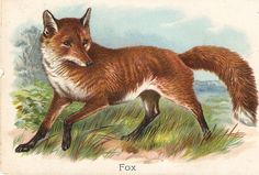 The Fox Beautiful Tuck Educational card by sharonfostervintage, $7.50