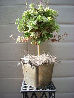 topiary tree for weddings with flowers | Moss Ball Topiary Tree with 12 Bamboo Stem by SucculentSalon, $99.00