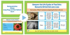 These 'Living Things' slides include information about David Attenborough and Jane Goodall, a creative thinking task, a comparison between wild and domestic cats, grouping different animals and a class experiment. Morning Activities, Science Activities, Primary Teaching, Teaching Resources, Jane Goodall, Domestic Cat, Creative Thinking, Early Morning, Something To Do