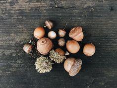 "soupatraveler: "" So long autumn & acorns, it's time for pine cones and cold… (autumn leaves aesthetic) Artemis Fowl, Pixie Hollow, Disney Fairies, Tinkerbell, Autumn Aesthetic, Gold Aesthetic, The Dark Artifices, My Neighbor Totoro, Acorn"