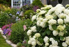 Shady spots in a garden are often considered a problem, but this need not be the case so long as suitable plants are chosen for these areas. Just think of… Shade Loving Perennials, Plants, Flowers, Autumn Garden, Perennials, Growing, Flower Beds, Garden