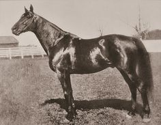 Man o' War: A Photographic Tribute - Slideshow - BloodHorse The Belmont Stakes, Sport Of Kings, Thoroughbred Horse, Horse Racing, Race Horses, Man O, Kentucky Derby, Beautiful Horses, War