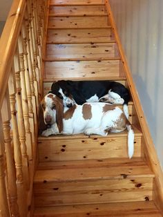 The guard dogs! Basset Puppies, Bloodhound Dogs, Hound Puppies, Basset Hound Puppy, Dogs And Puppies, Beagles, Doggies, Best Dog Breeds, Best Dogs