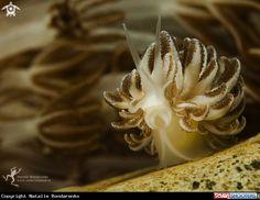 Hudibranch