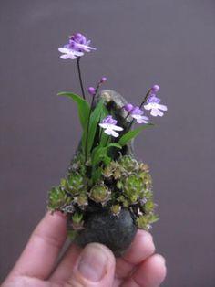 春嘉の盆栽工房 Bonsai workshop in spring Jia Ikebana, Miniature Orchids, Miniature Plants, Moss Garden, Bonsai Garden, Unusual Flowers, Unusual Plants, Planting Succulents, Planting Flowers
