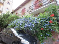 the beauty of nature Taormina / Sicily Taormina Sicily, Natural Beauty, Nature, Plants, Flora, Plant, The Great Outdoors, Mother Nature, Planting