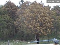 Tree full of pollen