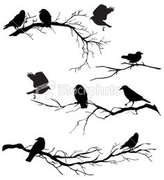 Google Image Result for http://i.istockimg.com/file_thumbview_approve/7049728/2/stock-illustration-7049728-crows-on-branches.jpg