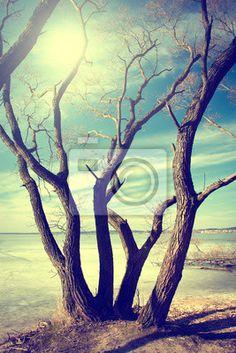http://pixersize.com/wallmurals/landscapes/trees