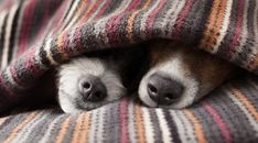 7 Strange Sleeping Habits of Dogs | CANIDAE® Blog