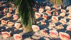 Conch Beach