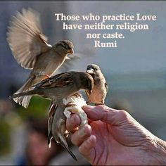 Those who practice Love have neither religion nor caste. ~ Rumi