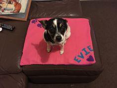 Fleece blanket made for my lil girl 💜🐾
