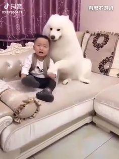 Ideas increíbles y fotografía. Cute Funny Animals, Cute Baby Animals, Funny Dogs, Animals And Pets, Cute Cats, Cute Gif, Animal Memes, I Love Dogs, Animals Beautiful