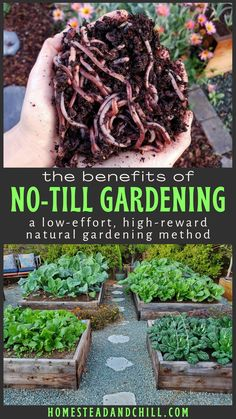 What is No-Till Gardening or Farming (aka No-Dig): the Benefits Explained