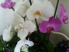 Orkidelerim ♡