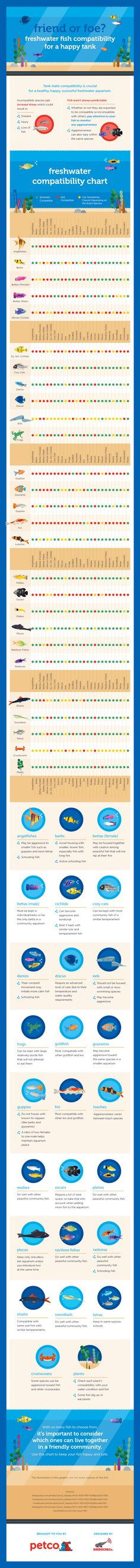 Friend or Foe? Freshwater Fish Compatibility for a Happy Tank Infographic
