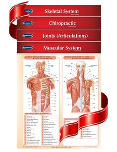 Chiropractic Bundle - his 4 chart bundle is prefect for the Chiropractic student or professional. Complied from our award winning, highly detailed Medicine and Anatomy series 4 quick reference guides bundle that covers the Skeletal System, Joints, Muscular System and Chiropractic.    In true Permacharts fashion these 4 expertly written charts provide you with just the facts, tips and information you need to know to learn fast.
