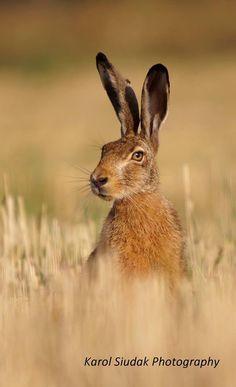 """Hare - Raising!""   (Photo By: Karol Siudak Photography.)"