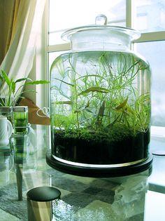 no-tech planted jar