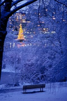Christmas in Stanley Park, Vancouver.. hey.. this new yorkers lives here now.. !! not quite NYC central park .. but nice snow scene for Vancouver BC...ha