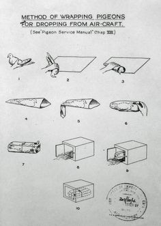 ????? 1919: Method of wrapping carrier pigeons for dropping from air-craft