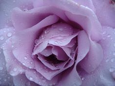 Raindrops on roses...literally.