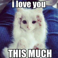 Kitty love…….