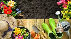 Get Ready to Bloom: Is Your Spring Garden Ready? | The Weather Channel