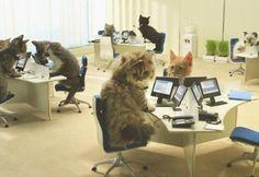 FRIDAY CATS – gifs de gatinhos prodígio Reprodução, Giphy/