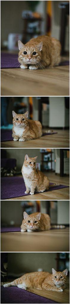 animals, cats, koty, kot, rudy kot , animalsphotography , catsphotography