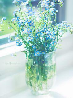 adorables petites fleurs bleues