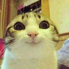 Smiley kittty