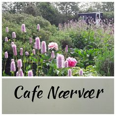 Cafe Nærvær. I skurvognen har vi indrettet en lillebitte cafe. Vi har åbent efter aftale.