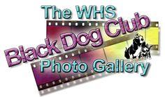 Black Dog Club Black Dog Syndrome, Photo Galleries, Club, Dogs, Pet Dogs, Doggies