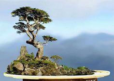 ~ Saikei = Landscape ~