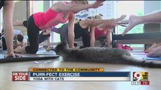 My two felines firmly believe this!  #Yoga with #Cats is Purr-fect #Exercise