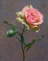 Rose  Oil on panel  by Graydon Parrish