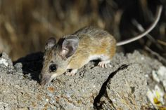 How to keep mice out of your house without doing harm to pets & kids.