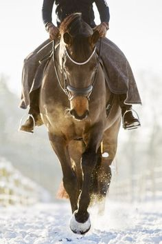 """The horse, with beauty unsurpassed, strength immeasurable and grace unlike any other, still remains humble enough to carry a man upon his back."""