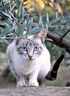 "500px / Photo ""Un lindo gatito..."" by Mercedes Salvador"