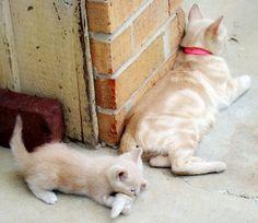 cute kitten  これ、おいしいやつかな?